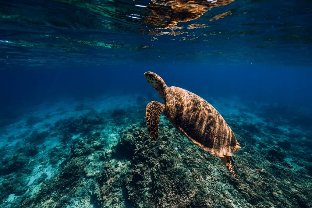 Virtual Globetrotting: The Great Barrier Reef